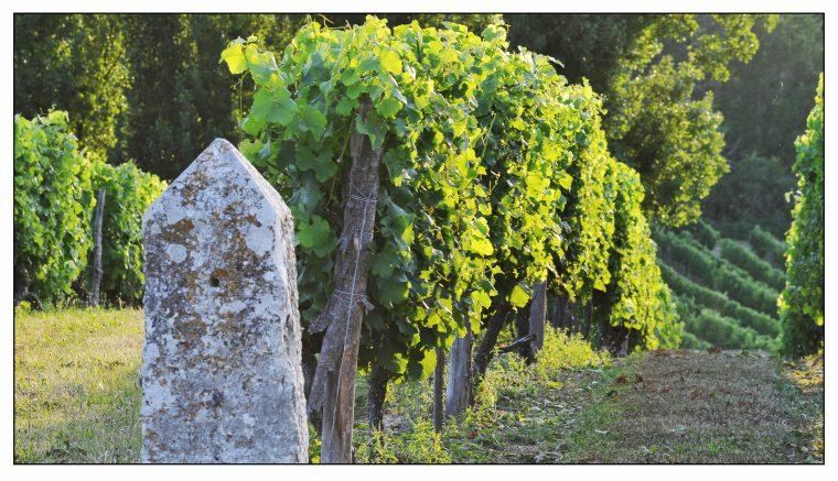 Les vignes de Monbazillac